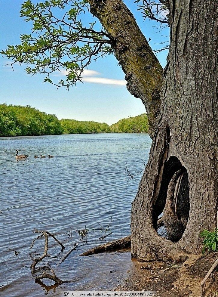 河边的大树与田园风光