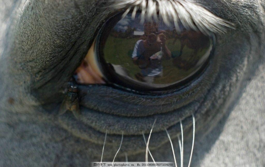 马的眼睛 有神 动物 摄影
