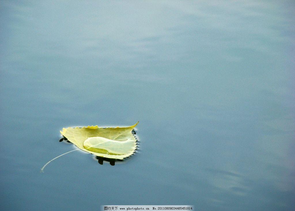 树叶 水中叶子 叶子 孤独 漂泊 水中 水中树叶 绿叶 风景 山水风景
