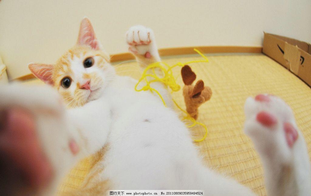 可爱的小猫咪 可爱 小猫咪 床上打滚 撒娇 宠物 家禽家畜 生物世界