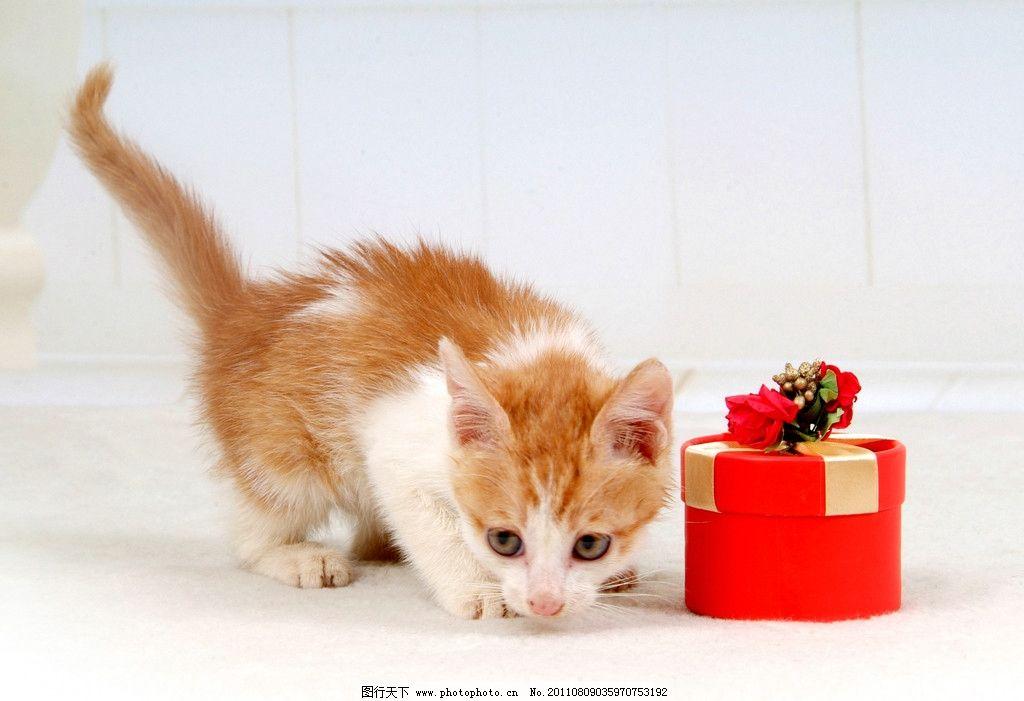 漂亮小猫 宠物 宠物猫 宠物摄影 小猫 美图 猫 插图 桌面 屏保 可爱