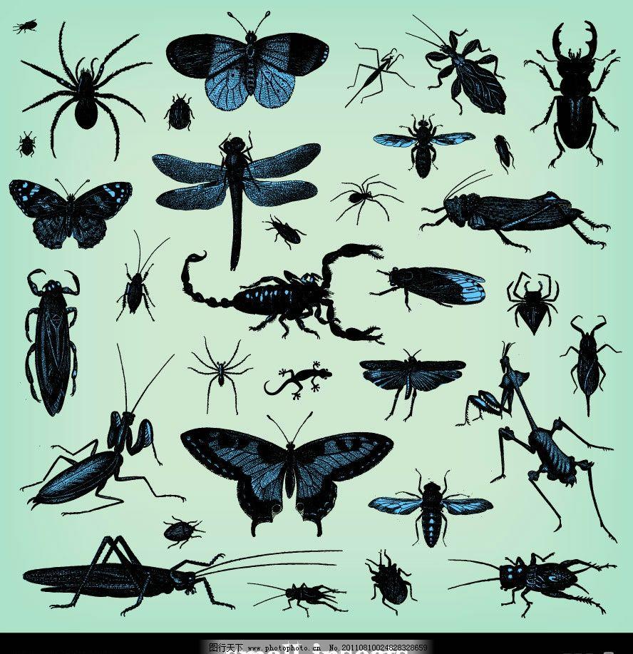 手绘昆虫 手绘 昆虫 蝴蝶