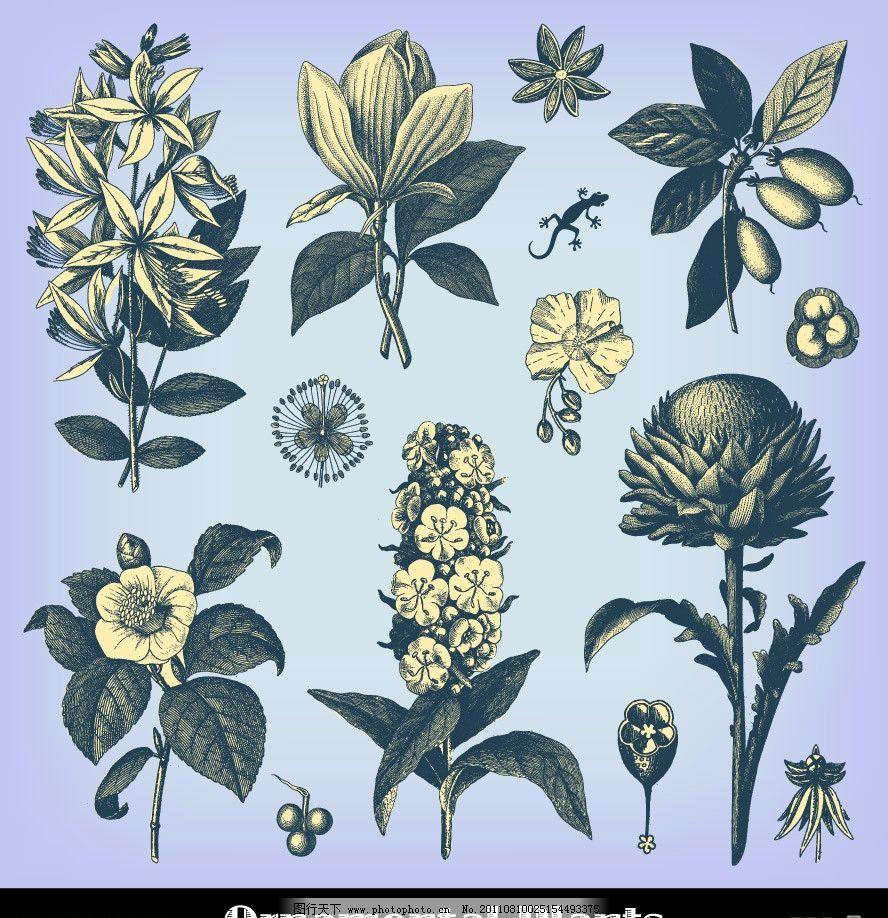 手绘植物树叶花朵图片