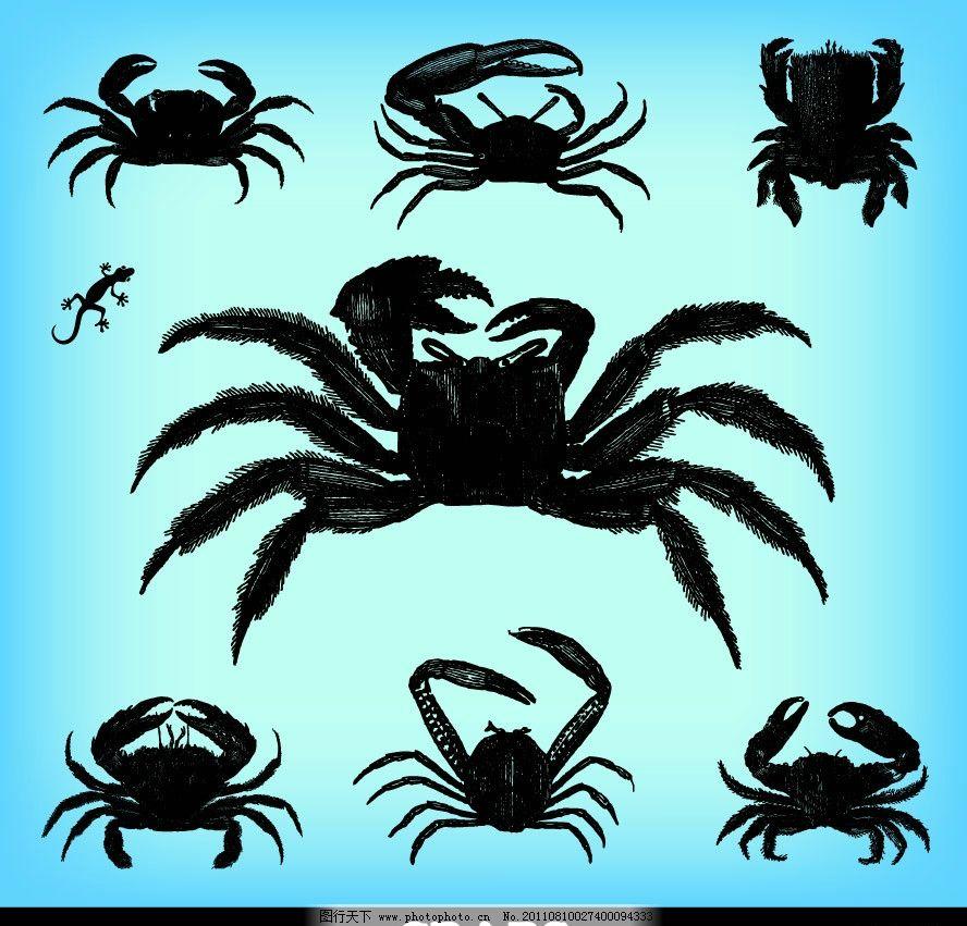 手绘螃蟹大闸蟹 壁虎 生物 矢量 海洋生物 生物世界