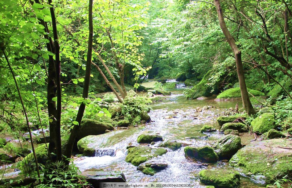 绿色风景 风景 绿色 河流 树木 清爽 石头 山水风景 自然景观 摄影