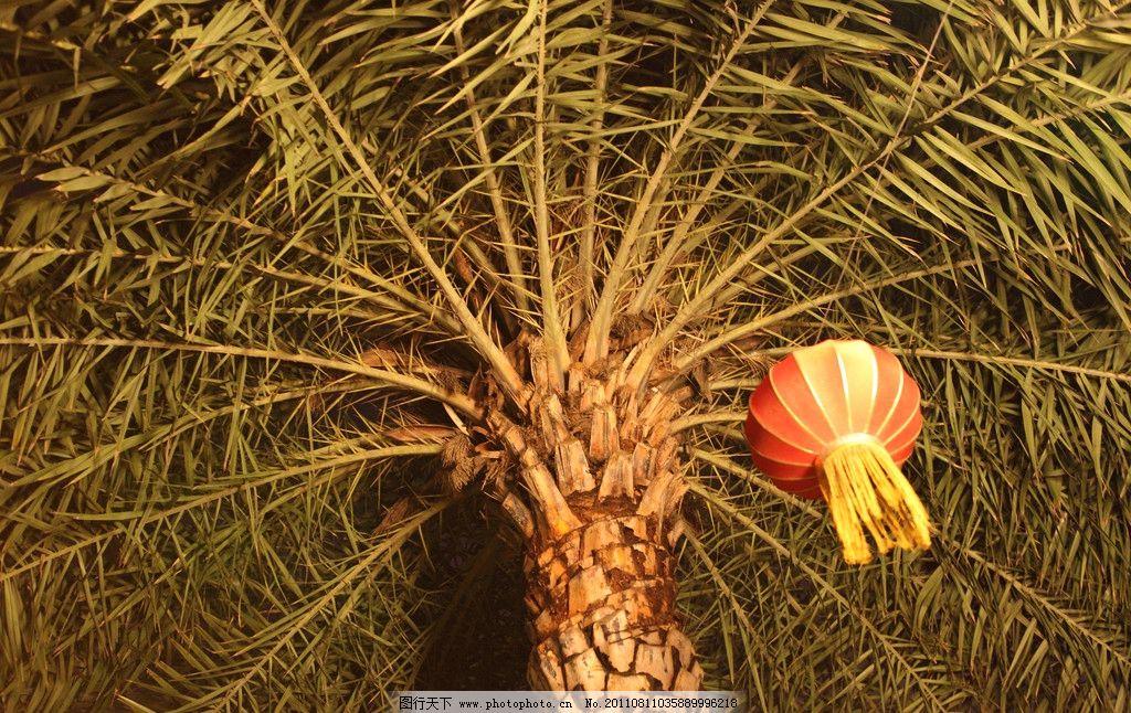灯笼图片_树木树叶_生物世界_图行天下图库