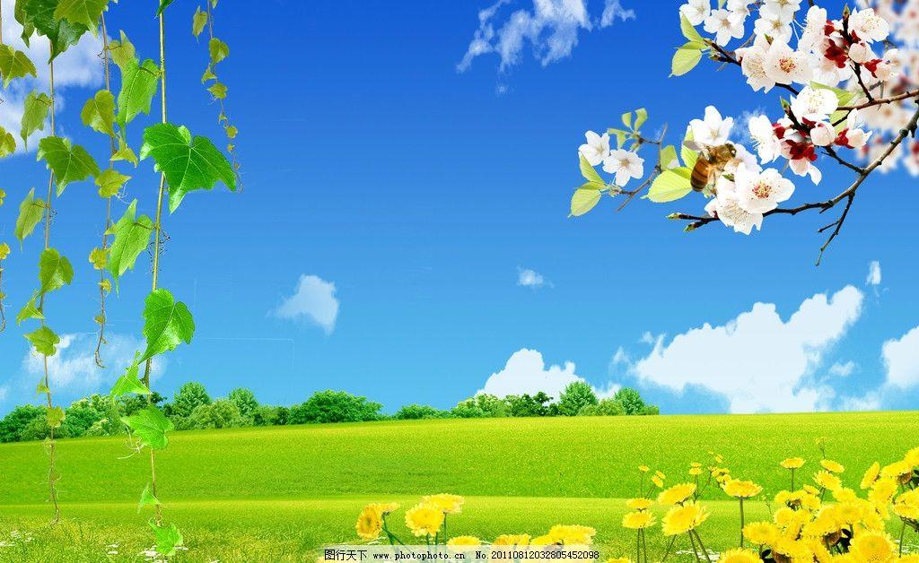 户外风景 蓝天白云 小草 小花 花朵 树梢树林 杏花 户外海报 风景 psd