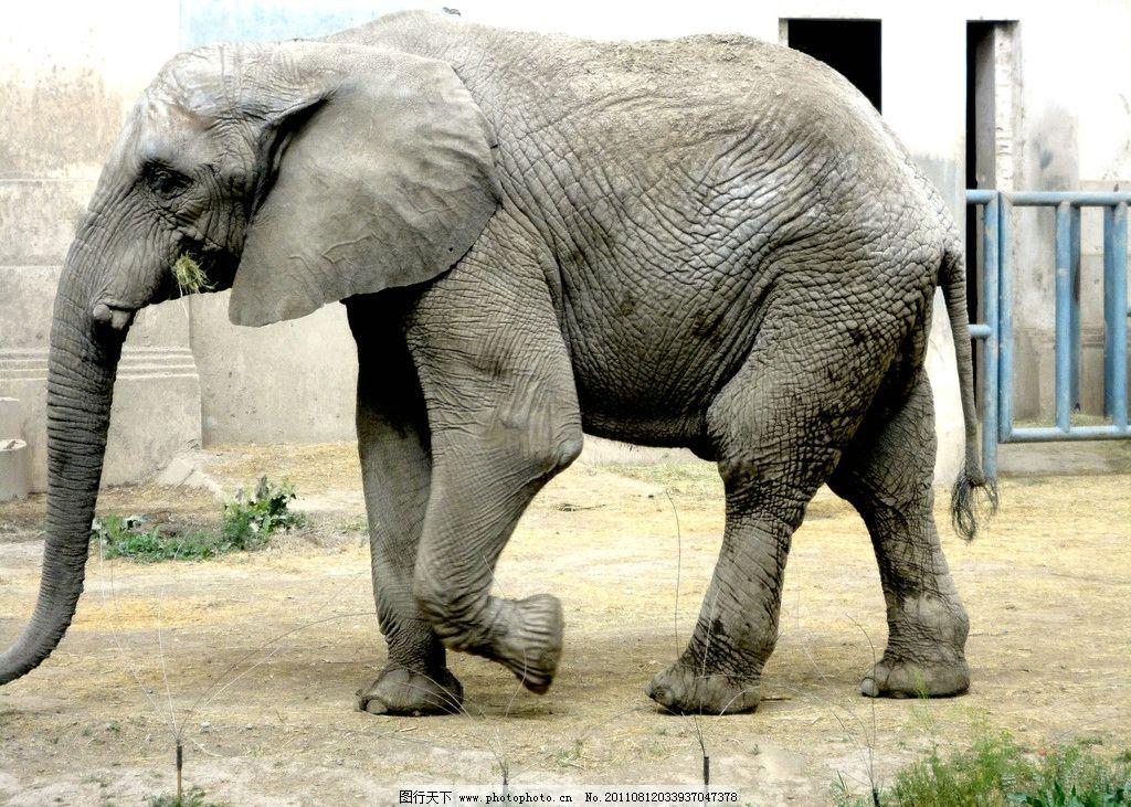 大象 非洲象 动物 动物园