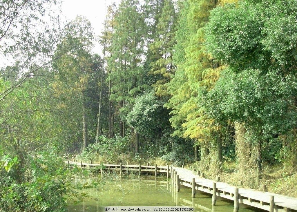湖边的木栈道 弯曲的木栈道 茂密的树丛 静静的湖水 水中的倒影 自然