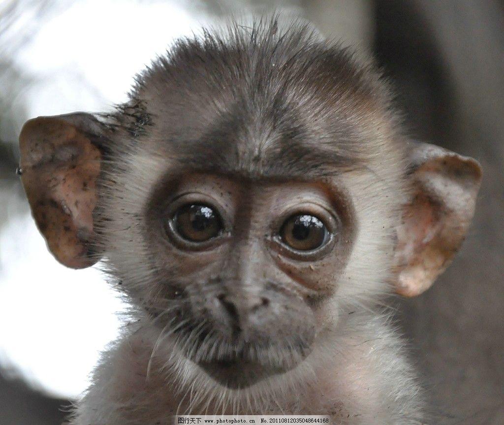 猴子 小猴子 可爱 刚出生的猴子 野生动物 生物世界 摄影