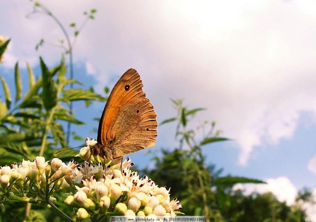 蝴蝶 动物图片 昆虫摄影 昆虫图片 漂亮的蝴蝶 蝴蝶素材 蝴蝶图片集