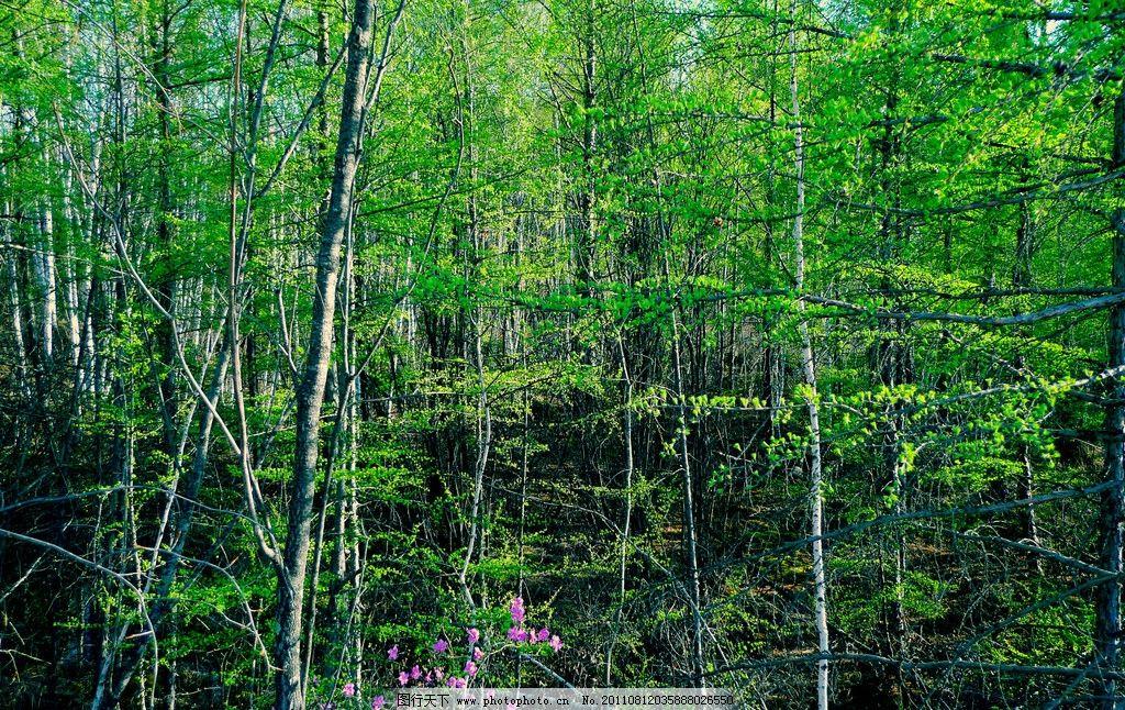 林间树 杨树 槐树 银杏树 桃花 树木树叶 生物世界 摄影 180dpi jpg