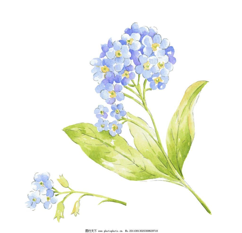 手绘水彩花卉 精致 水彩 小花 花卉 图案 面料 服装 家纺 手绘 清新