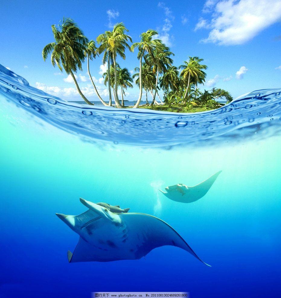 水下的鲸鱼 椰子树 海南 大海 海底世界 海底风光 鲸鱼 蓝天 蓝色的水