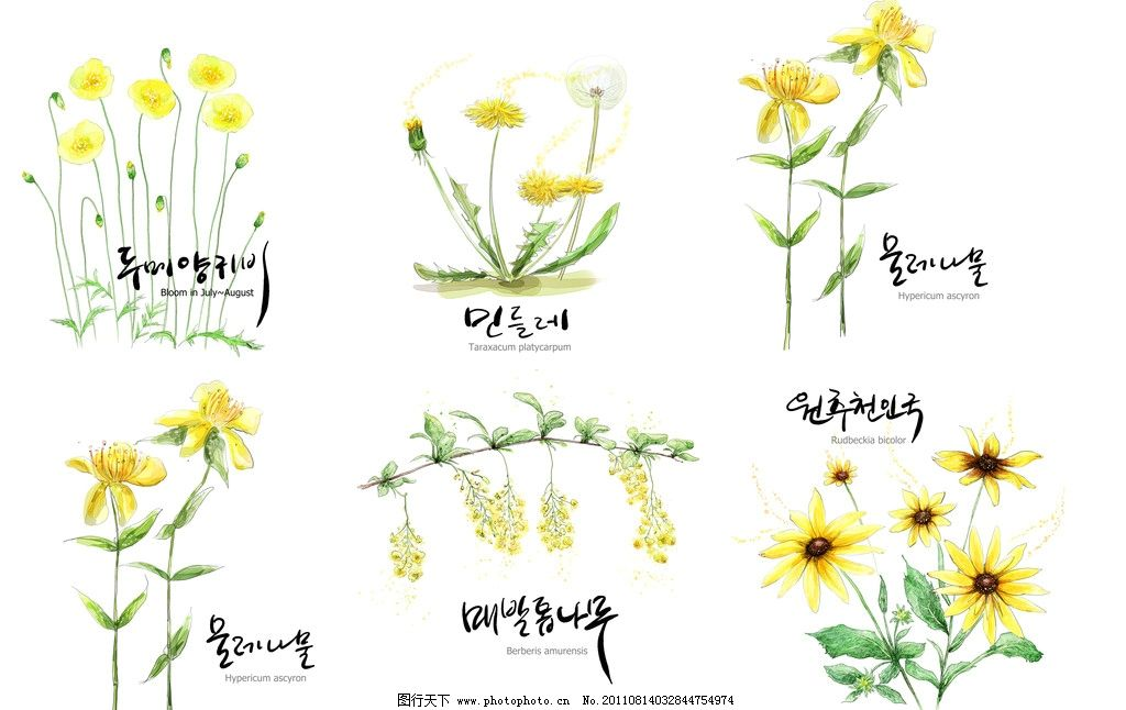韩国手绘花朵图片