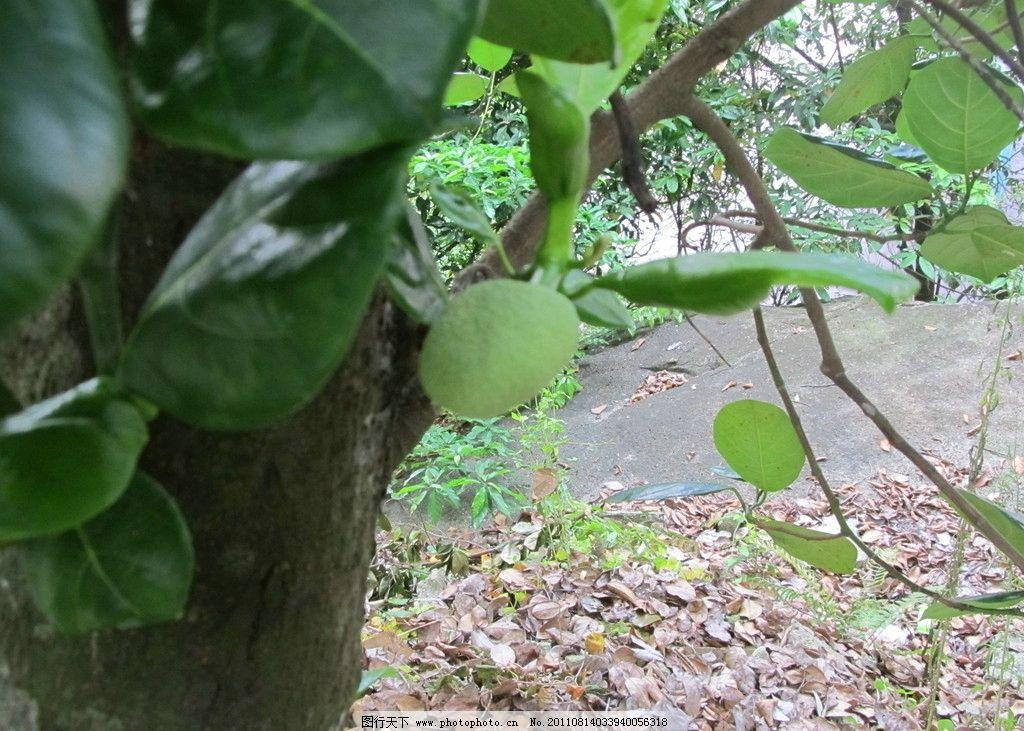 树叶树干 树叶 树干 树枝 落叶 枯叶 石头 摄影图片 国内旅游 旅游