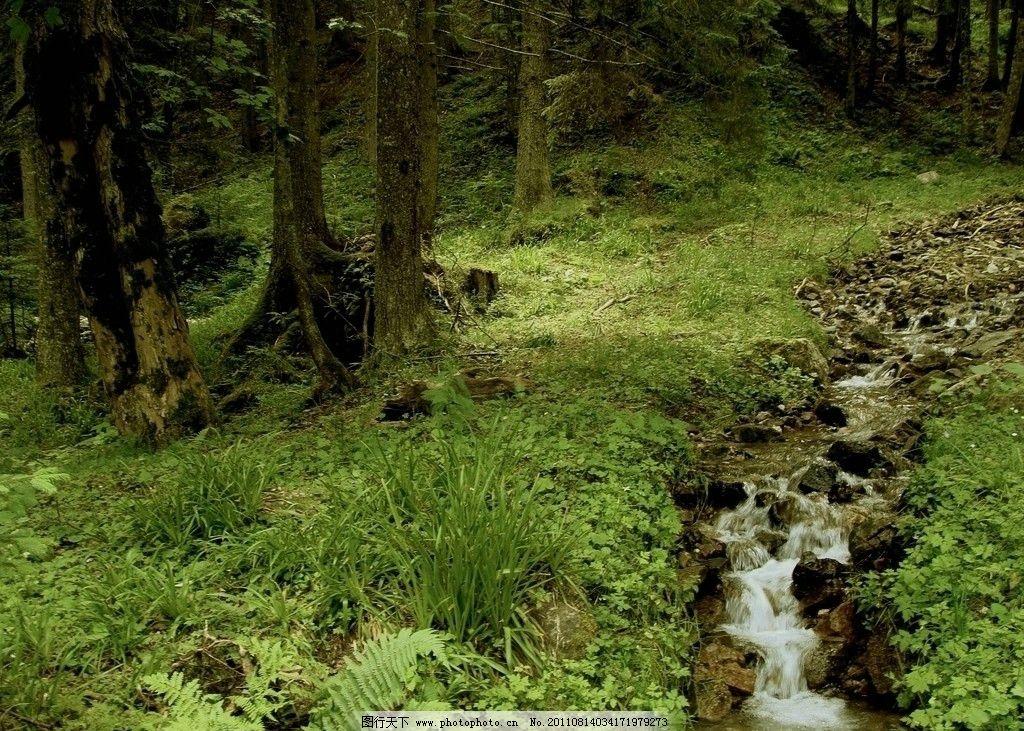 森林小溪图片