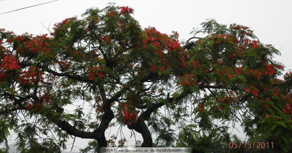 木棉花 广州香雪公园 广州市花 木棉树 树木树叶 生物世界 摄影 72dpi