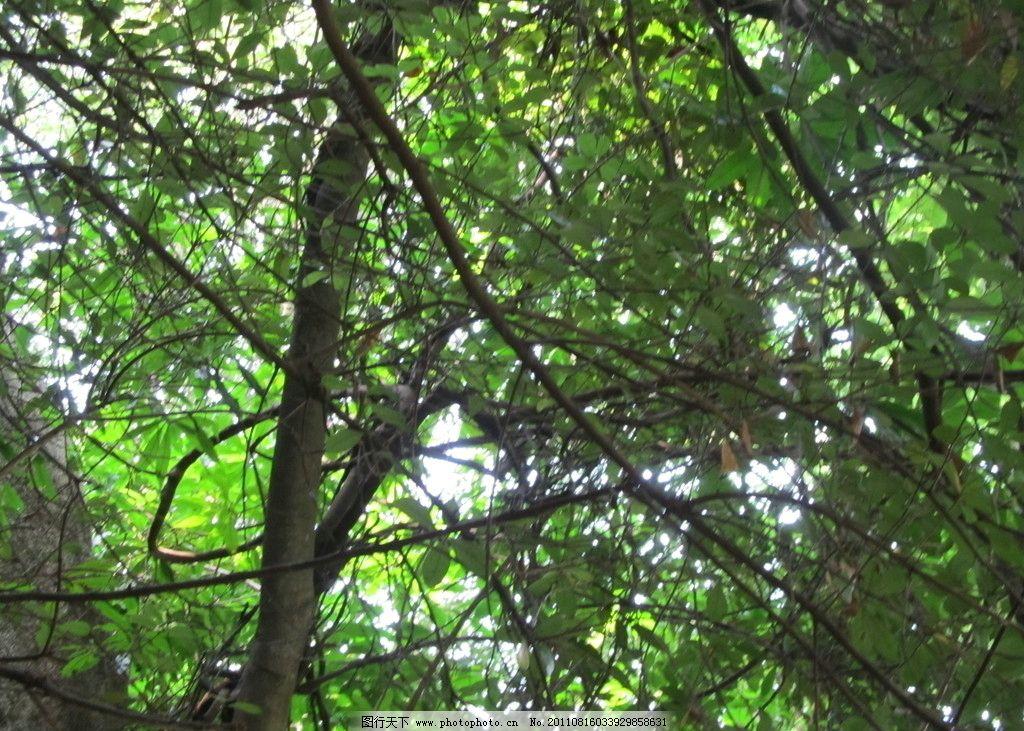 茂密在树枝 树叶 树干 树枝 落叶 枯叶 石头 太阳 阳光 摄影图片 国内
