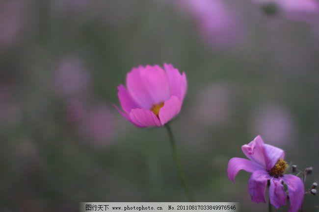 粉红色的小花