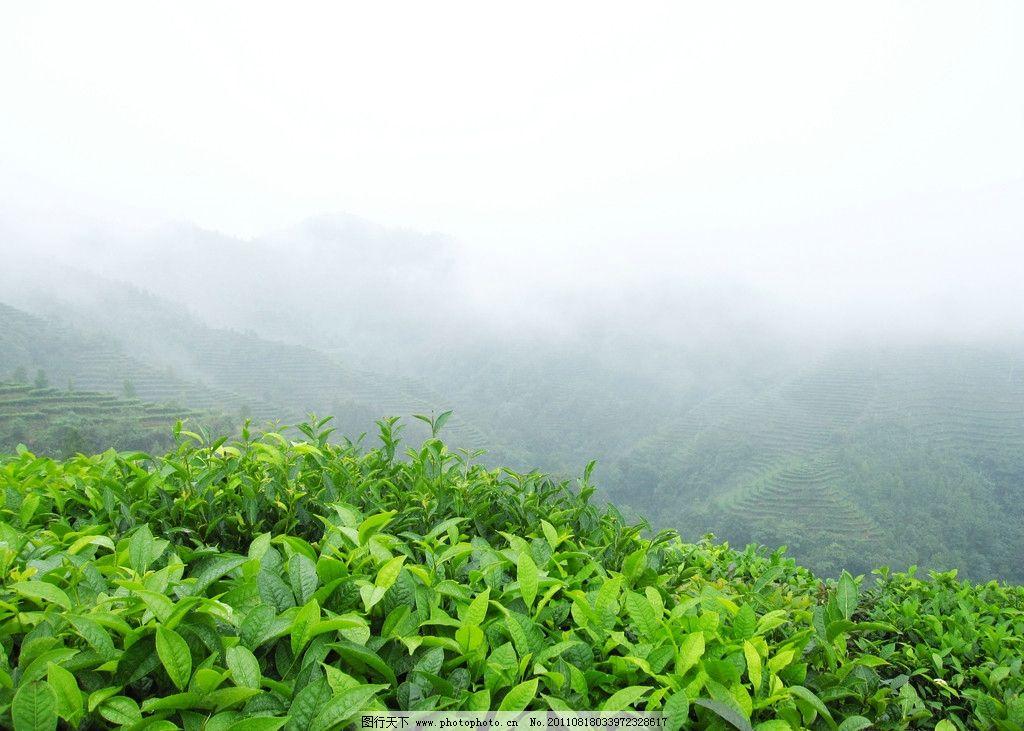 茶山风景区温馨提示语