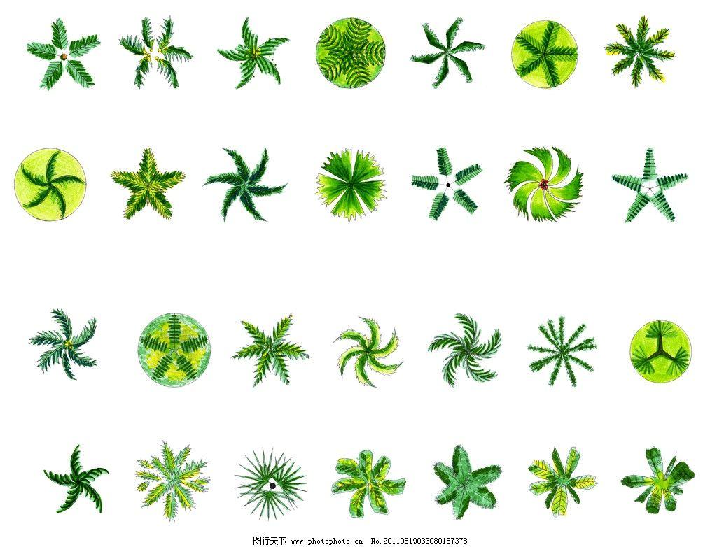 植物平面图 景观设计 灌木 景观平面图 园林植物平面素材彩图 园林