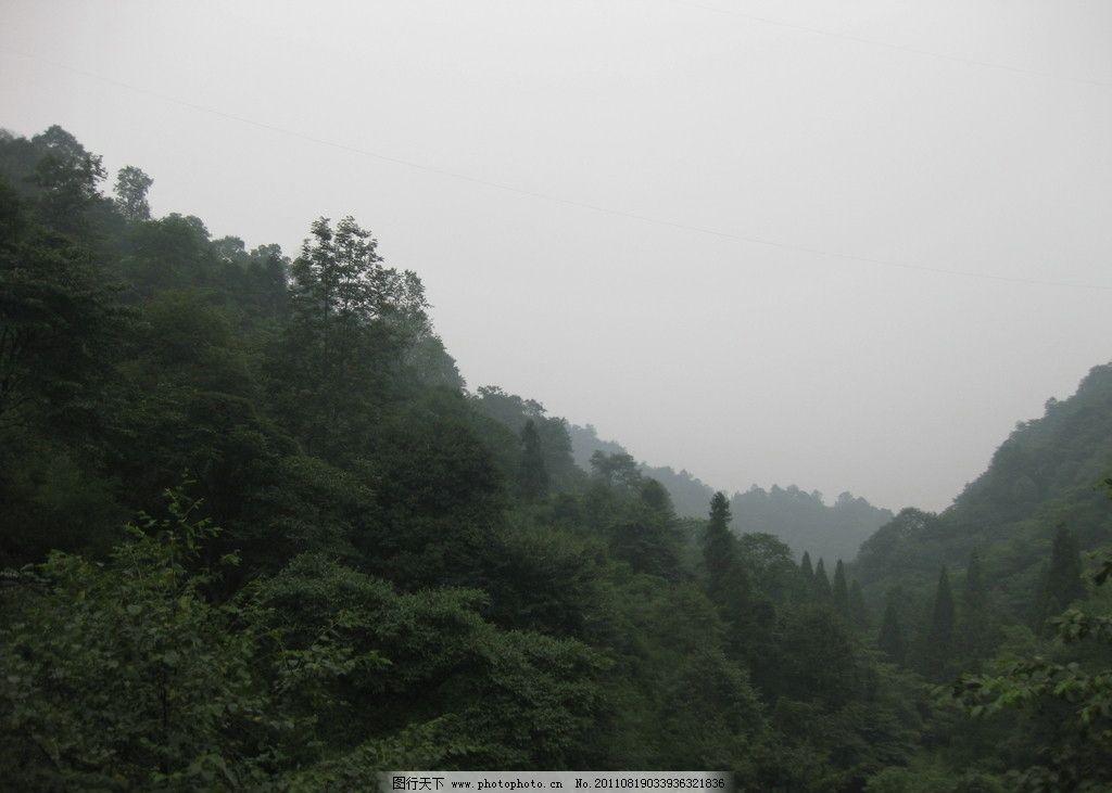 山林 青城山风景 天然风景区 簿雾 森林 天然氧吧 合江亭 青城山 国内