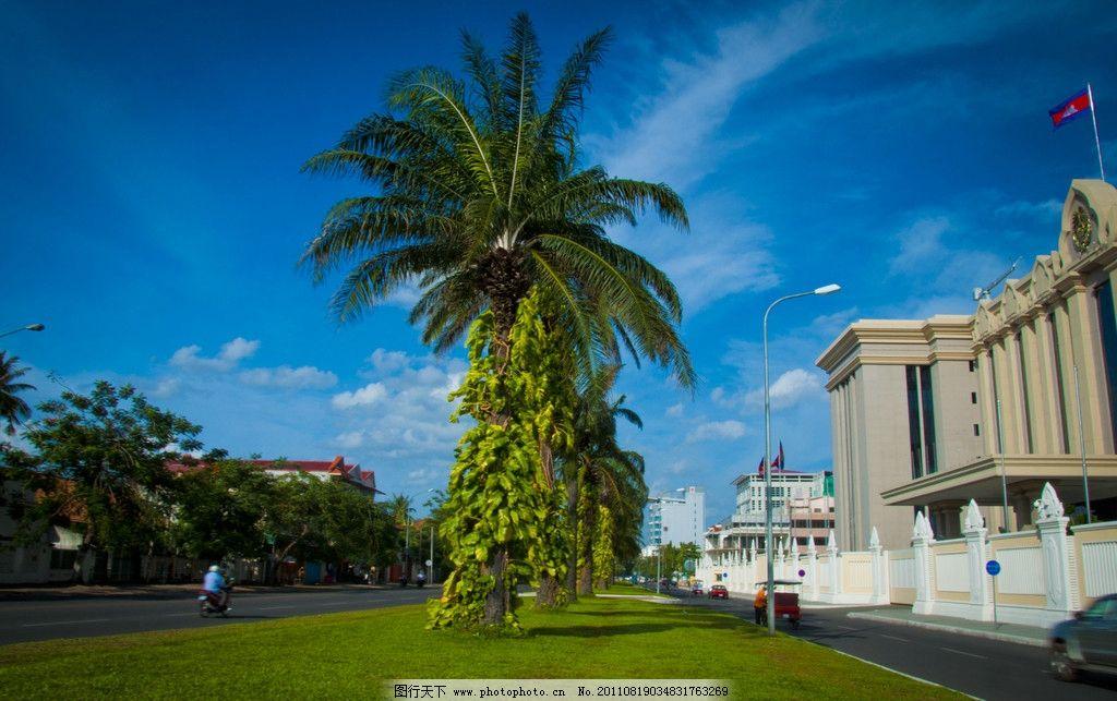 美丽的椰子树 椰子树 绿色 树叶 椰子 蓝天 路上 绿草 自然风景 自然