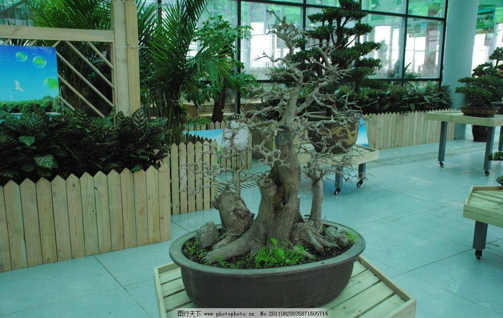盆景 造型艺术 苗木 花草 室内 装饰 景观 盆栽 空气净化 树木树叶