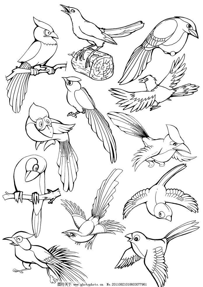 手绘黑白线稿 手绘 线稿 鸟类 喜鹊 动物线稿 手绘线稿 黑白插画 可爱