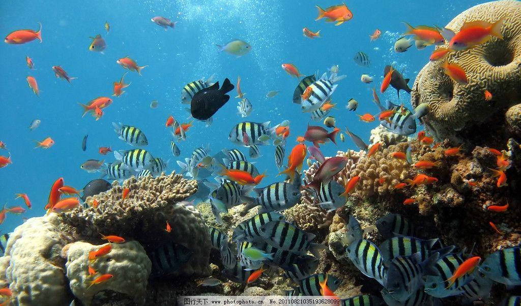 海底世界 海洋 漂亮 鱼群 热带鱼 海洋生物 生物世界 摄影 300dpi jpg