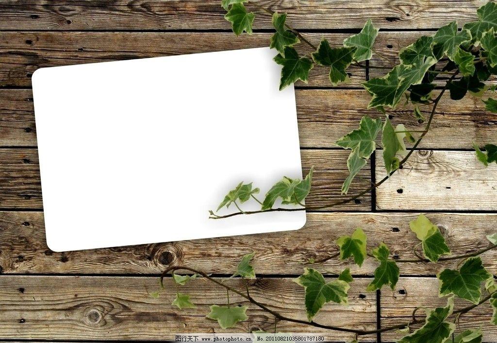 绿叶 木板 木板背景底纹 木纹 树叶 白纸 树木树叶 生物世界 摄影 300