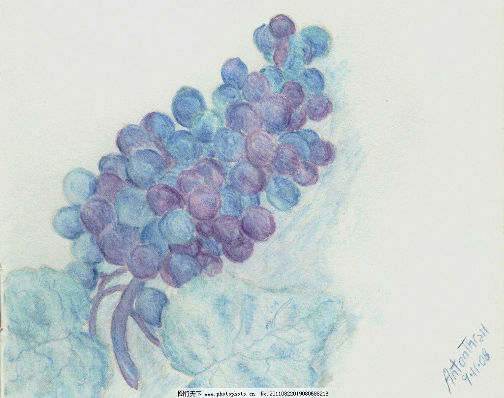 葡萄水彩画 水彩画 水粉画