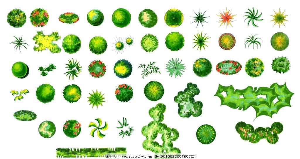 植物平面图图片
