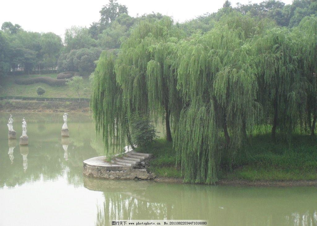 柳树湖水的图片大全