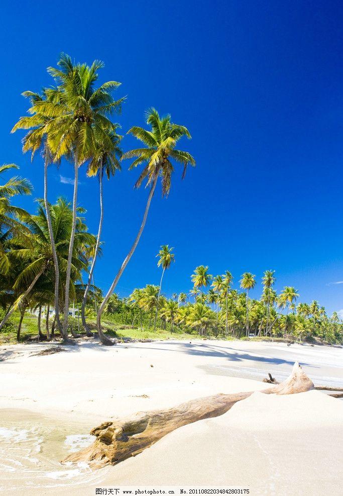 景观 植物 椰子 椰树 海岸 海水 海蓝 椰子树 海景 大海 沙滩 海滩