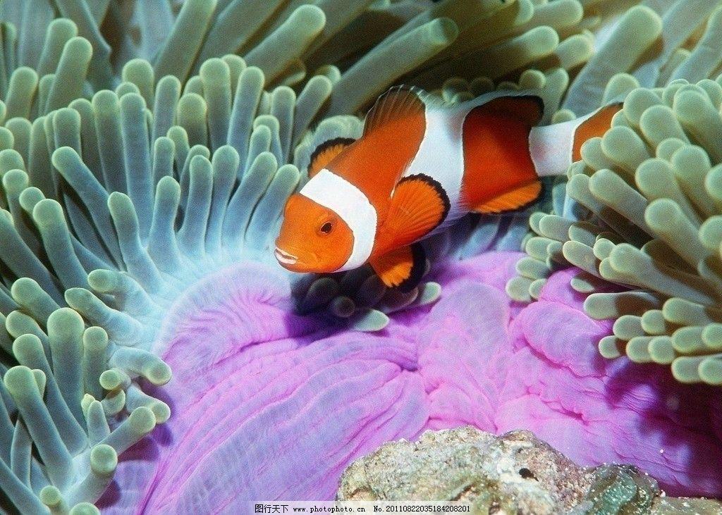 海底世界 可爱 鱼 水草 海底 金鱼 海洋生物 生物世界 摄影 300dpi