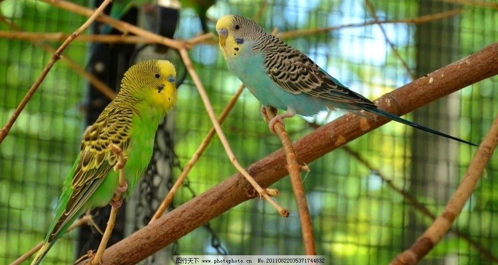 鹦鹉 蓝色鹦鹉 绿色鹦鹉 动物园 鸟笼 图库 鸟类 生物世界 摄影 72dpi