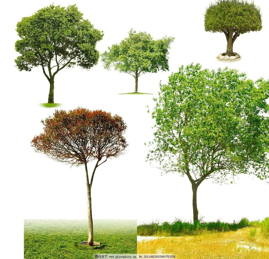 树木 树 背景 原文件 花草树木 草坪 大树 psd原文件素材 psd分层素材