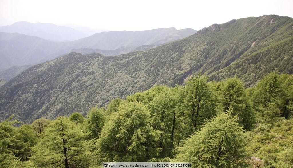 森林四季图片
