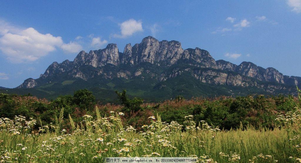 庐山五老峰 五老峰 菊花 山 山峰 树木 花朵 鲜花 自然风景 自然景观