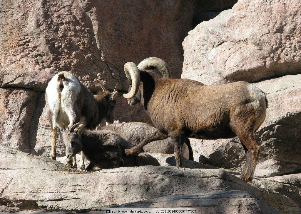 羚羊 野生动物 动物世界 高清摄影 180dpi jpg 动物 生物世界 摄影