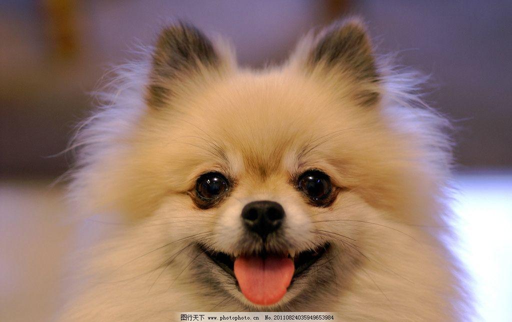 宠物狗 动物 生物 大自然 野生动物 生命 哺乳动物 多细胞 环境