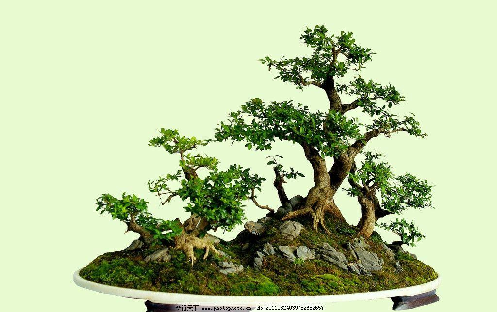 盆景 盆景艺术 盆裁 植物 盆景素材 其他 建筑园林 摄影 72dpi jpg