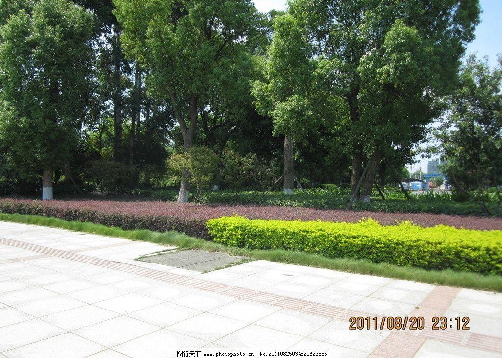 绿篱 绿树 绿化 园森 冬青树 景观树 自然风景 自然景观 摄影 180dpi