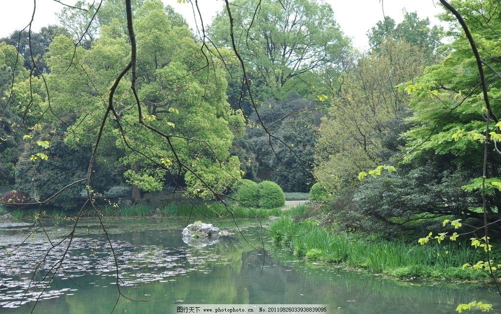 杭州植物园 树林 大自然 绿叶 湖水 杭州植物园风景区 国内旅游