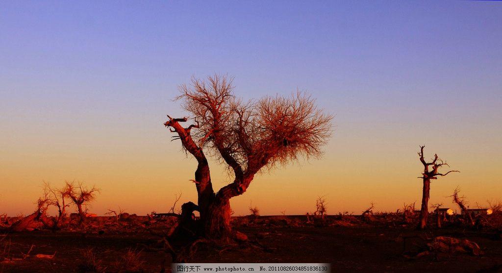 夕阳枯木 夕阳 黄昏 晚霞 大漠 戈壁 荒漠 枯木 大树 自然美景 自然