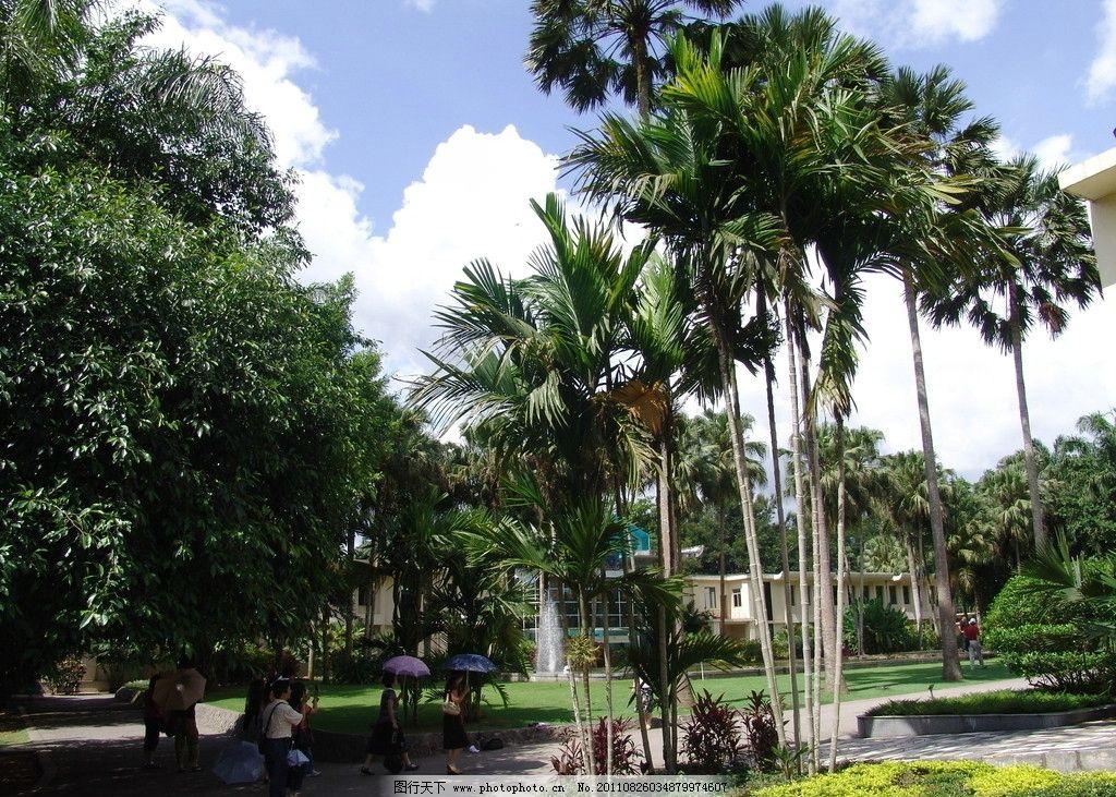 云南风景 绿树 椰子树 水边 蓝天 白云 自然风景 自然景观 摄影 72dpi