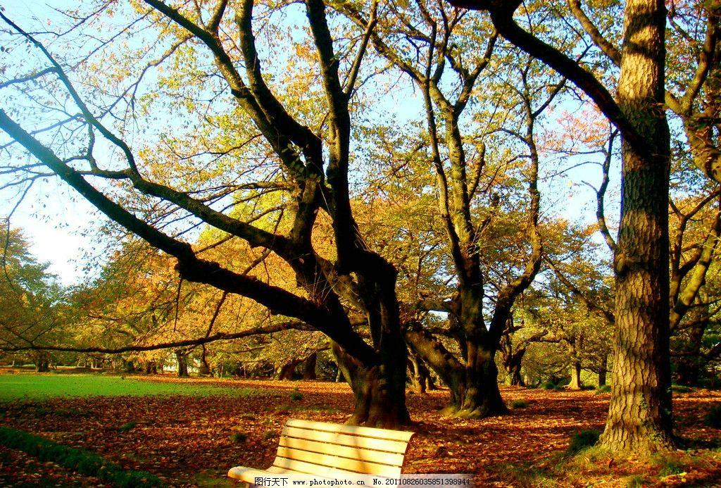 草地 草坪 绿地 椅子 木椅 生态公园 森林公园 树木树叶 生物世界