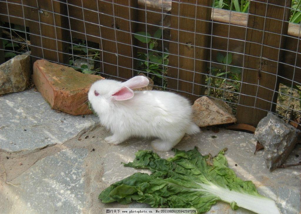 兔子 白兔 动物 动物园 公园 摄影